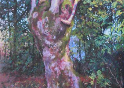Le frêne têtard de Brettencourt