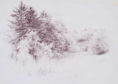 Le pré de Maclamod 2 - 55,5 x 41 cm - crayon de couleur - © Marie-Pierre Lavallard