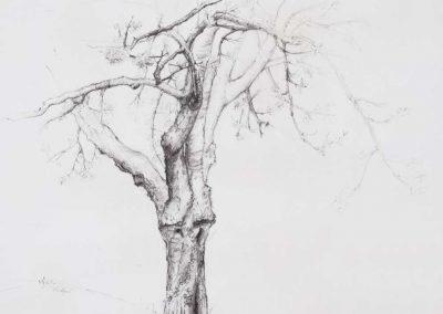 L'arbre de Madame Ferrier - 52 x 44,5 cm - crayon gras - © Marie-Pierre Lavallard