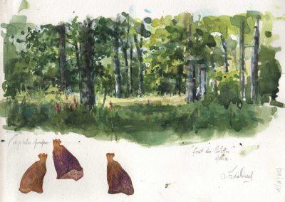 La forêt des Colettes - 29,7 x 21cm - aquarelle - © Marie-Pierre Lavallard