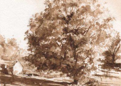 Le frêne de Conche 2 - 22 x 16 cm - aquarelle - © Marie-Pierre Lavallard