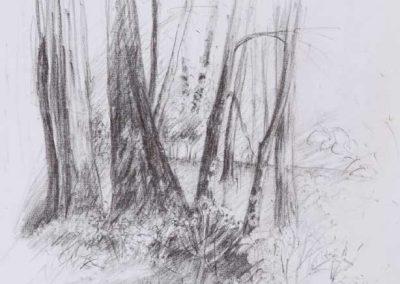 L'orée du Parc - 38 x 27,5 cm - crayon gras - © Marie-Pierre Lavallard
