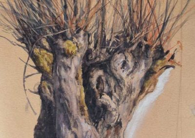 Trogne de Cusy au mois de mars- 42 x 29,7 cm - encres, aquarelle, crayon, gouache blanche - © Marie-Pierre Lavallard