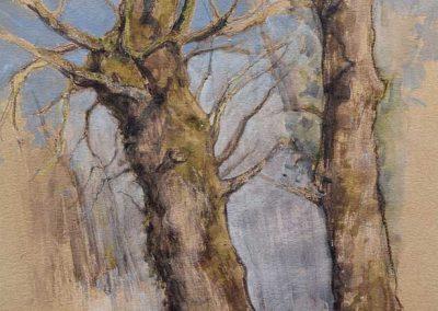 Deux frênes de Crosagny - 42 x 29,7 cm - encres, aquarelle, crayon, gouache blanche - © Marie-Pierre Lavallard