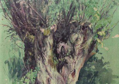 Trogne de Cusy au mois de juin - 42 x 29,7 cm - encres, aquarelle, crayon - © Marie-Pierre Lavallard