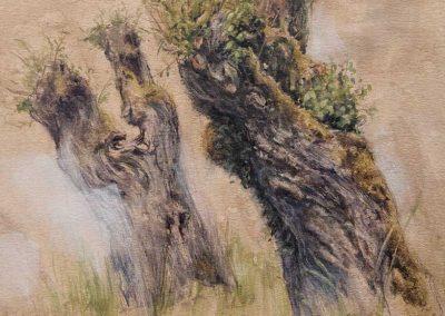 allée de trognes à Cusy - 32,3 x 29,7 cm - encres, aquarelle, crayon, gouache blanche - © Marie-Pierre Lavallard