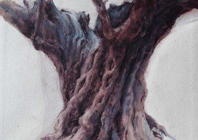 Olivier, noir sous la pluie 1 - 42 x 29 cm - crayon, encres, aquarelle, rehaut de blanc - © Marie-Pierre Lavallard