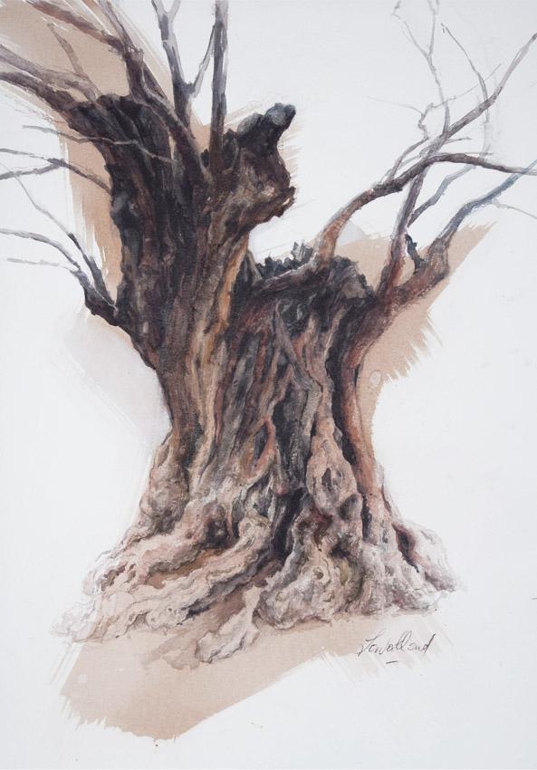 Olivier, noir sous la pluie 3 - 42 x 29 cm - crayon, encres, aquarelle - © Marie-Pierre Lavallard