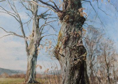 Châtaigner foudroyé 1 - 65 x 50 cm - aquarelle - © Marie-Pierre Lavallard