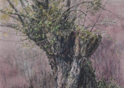 Trogne de Bassy - 42 x 29 cm - encres, aquarelle, crayon - © Marie-Pierre Lavallard