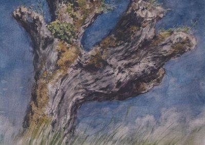 Trogne de Sâles - 38 x 29,7 cm - encres, aquarelle, crayon - © Marie-Pierre Lavallard